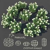 Hydrangea arborescens # 2. Customizable