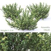 Shrubby bushes # 1
