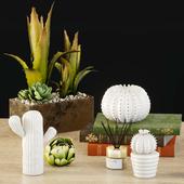 Decorative set _ cactus 2