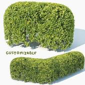 Buxus Sempervirens # 8 spherical modular hedge 50cm