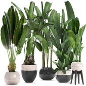 Plant collection 238.