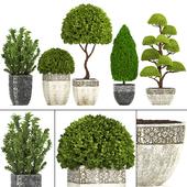 Коллекция растений 239.