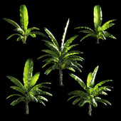 Banana palm tree Set of 5 models