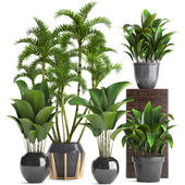 Plant collection 247.