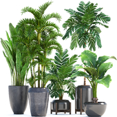 Collection of plants 250.