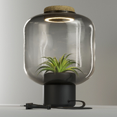 The plant lamp