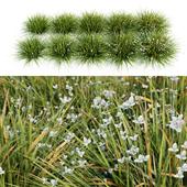 Libertia Grandiflora - 10 Modular Pieces