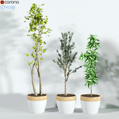 Plants_3dce_1