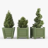 Buxus green pot