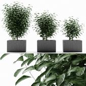 plant 33