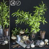Kitchen set with mango branches