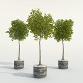 Outdor trees set one