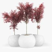 Japanese Maple Concrete planter / round / modular / contemporary