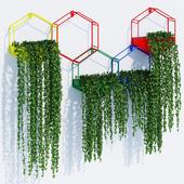 Hexagon color planters