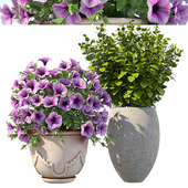Petunia with bushes