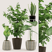 Plants 109