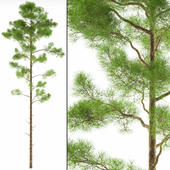 tree B