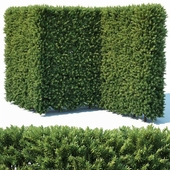 Taxus Baccata # 4 modular hedge 200cm