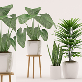 Plants 111