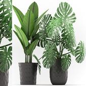 Plants 120