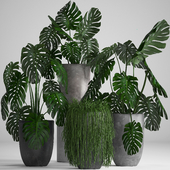 Plant collection 260.