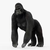 Figurine gorilla
