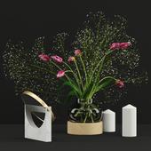Pink tulips and Gypsophila set