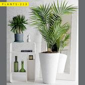 plants 213