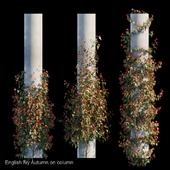 English Ivy Autumn on column
