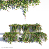 Ivy in concrete pot