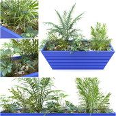 JC.Plant_3