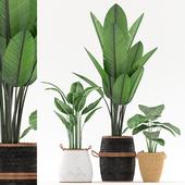 plants_121