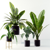 Plants collection 02