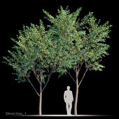 Street tree v1