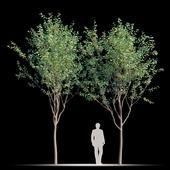 Street tree v2