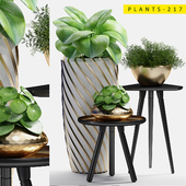 plants 217