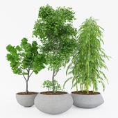 Plant Set 1