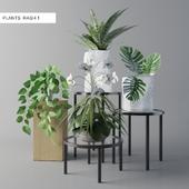 PLANT RASH-1