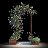 Timber Arbor with creeper plant