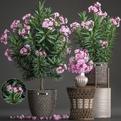 Коллекция растений 268.
