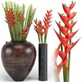 Tropical floor plants