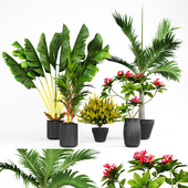 Collection of Plant 01