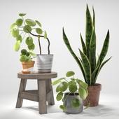 Set of plants 03