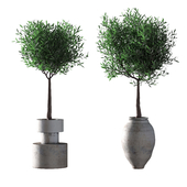 Оливковые деревья. 2 модели