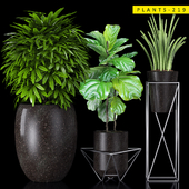 PLANTS 219