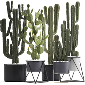 Plant collection 282. Cactus set.