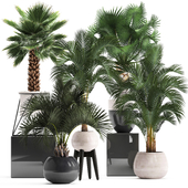 Plant collection 283. Palms set.