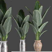 Plants 122