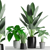 Plants 124