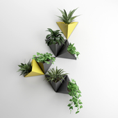 Wall plant 2